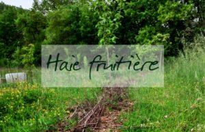 Initiation permaculture juillet 2019